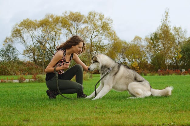 husky-dog-with-girl